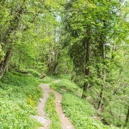 Die Bisse du Milieu im Frühlingsgrün