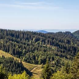 Viel Wald und zwischendurch mal Pisten