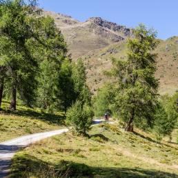 Steiler Forstweg
